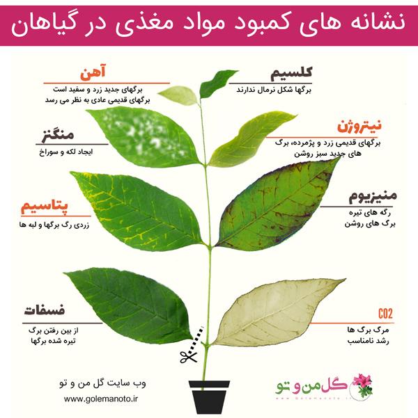 علائم تشخیص کمبود مواد مغذی گیاهان