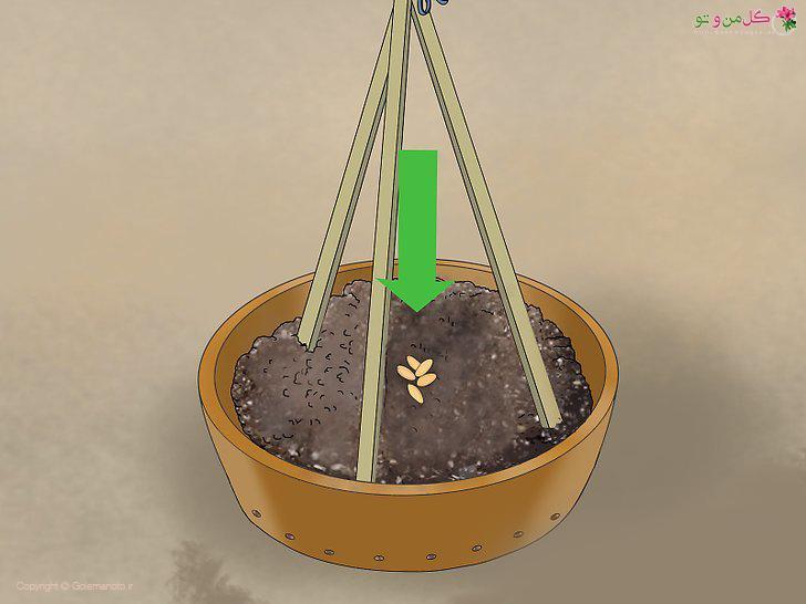 کاشت بذر در گلدان