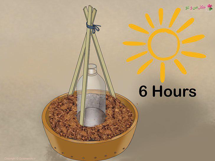 نور مناسب برای کاشت خیار
