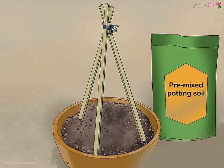 خاک مناسب گلدان برای کاشت خیار