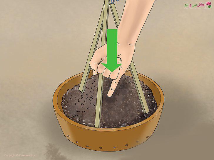 کاشت بذر خیار در گلدان