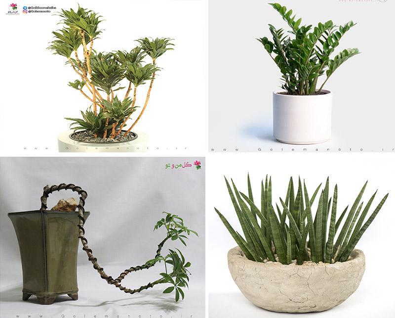 گیاهان با نیاز نوری کم