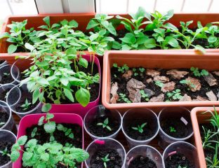 کاشت سبزی در خانه