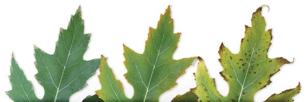 کمبود پتاسیم در خاک گیاهان