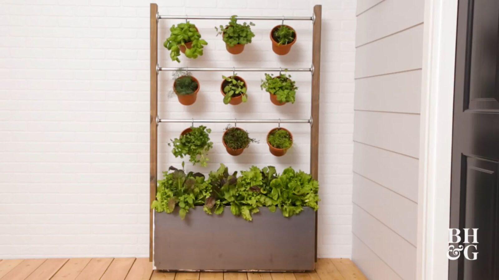 ساخت دیوار سبزیجات