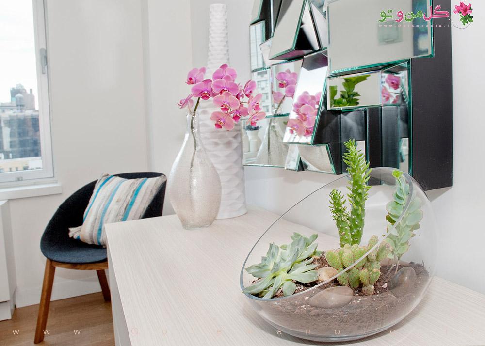 گل و گیاه منحصر به فرد برای داخل خانه