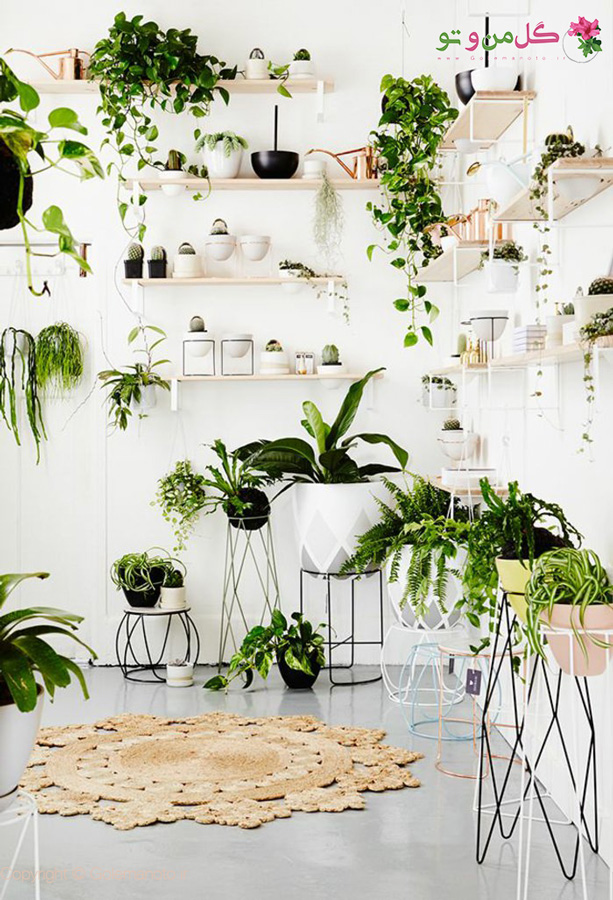 فضای محدود برای چیدمان گیاهان آپارتمانی