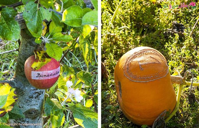 ایده ناب برای باغ