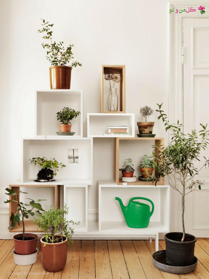 آماده کردن داخل خانه برای ورود گیاهان