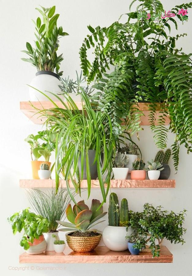 آموزش چیدمان گیاهان در خانه