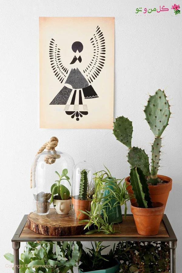 گیاهان آپارتمانی - چیدمان