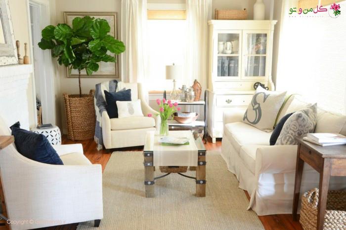 گیاهان آپارتمانی بزرگ