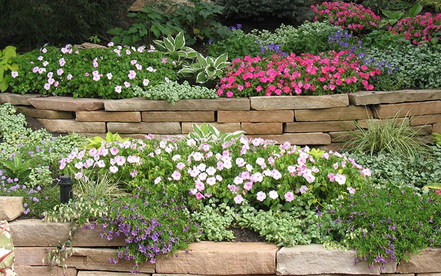 پرورش گیاهان فضای باز