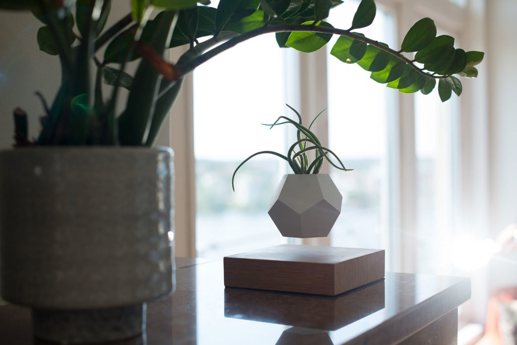 زیبایی و طراوت خانه با چیدمان خاص گل و گیاه
