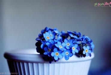 گل های آبی