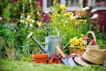 چگونه از باغچه نگهداری کنیم