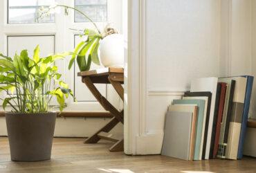 گیاهان آپارتمانی کم نور