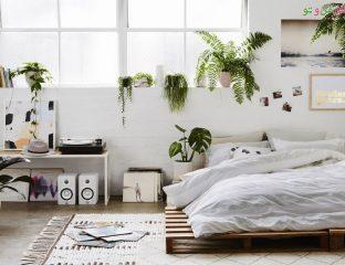 چیدمان گیاهان آپارتمانی