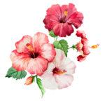 گل من و تو