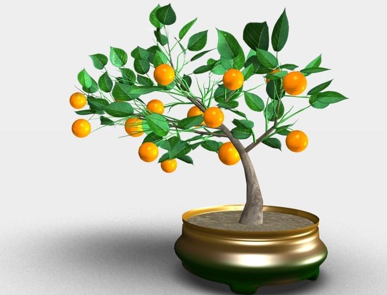 کاشت هسته درخت میوه در گلدان