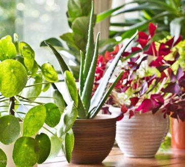 زیباترین گیاهان زینتی گلدار برای آپارتمان