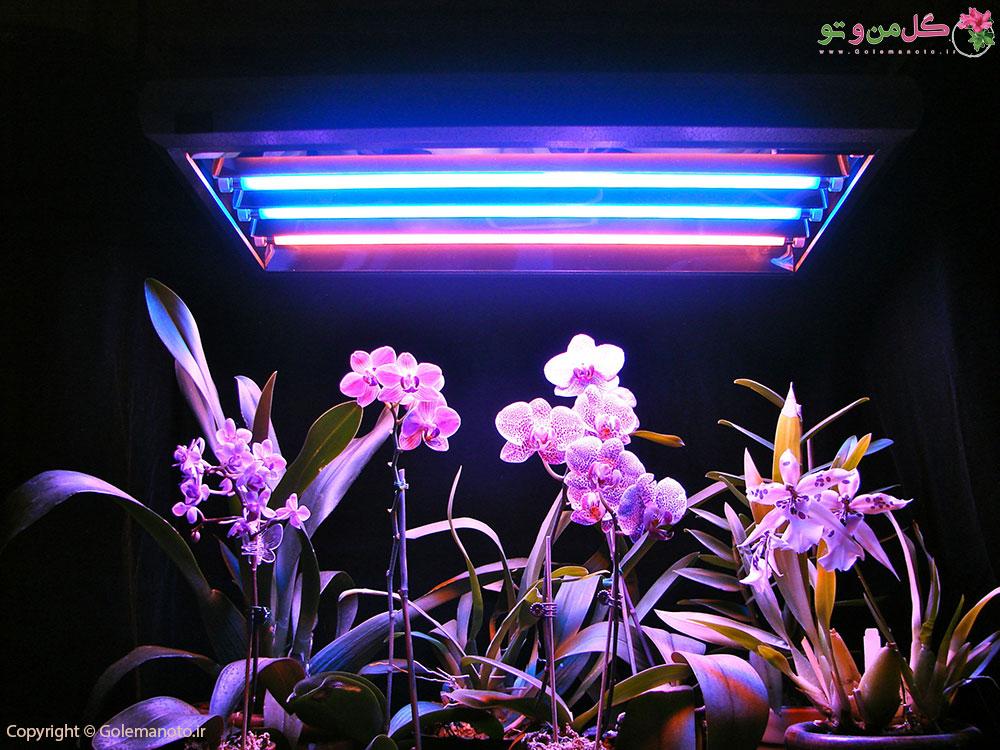 نور مصنوعی و رشد گیاهان