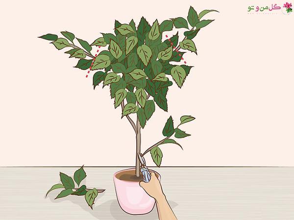 هرس گیاهان آپارتمانی