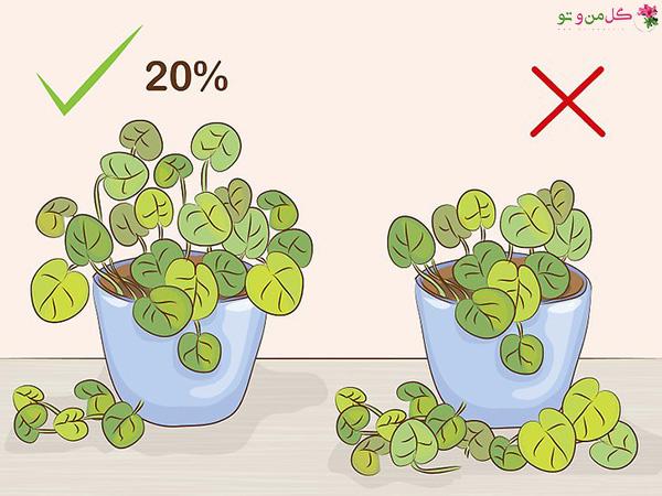 میزان هرس گیاهان آپارتمانی