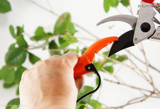 قیچی باغبانی و نکات کاربردی