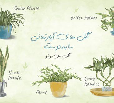 معرفی گل های آپارتمانی سایه دوست