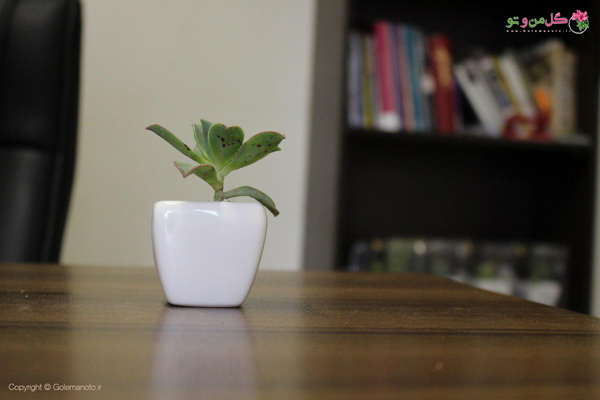 انواع گلدان - گلدان سرامیکی