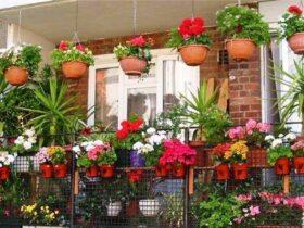 7 نکته مهم زنده نگه داشتن گل های آپارتمانی در فصل سرما