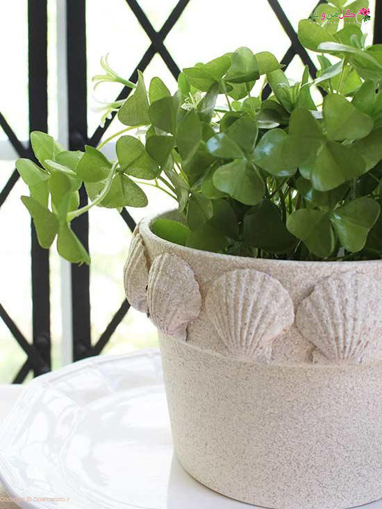 استفاده از صدف برای تزیین گلدان