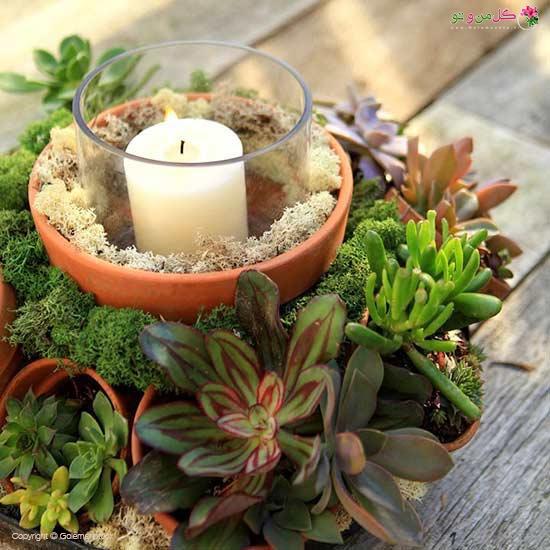 قرار دادن گلدان بین گیاهان