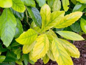 علائم و عوامل کمبود آهن در گیاهان و رفع آن