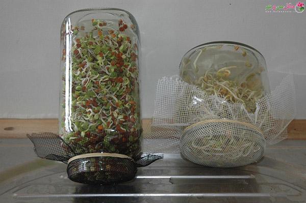 طرز تهیه جوانه حبوبات در شیشه مربا