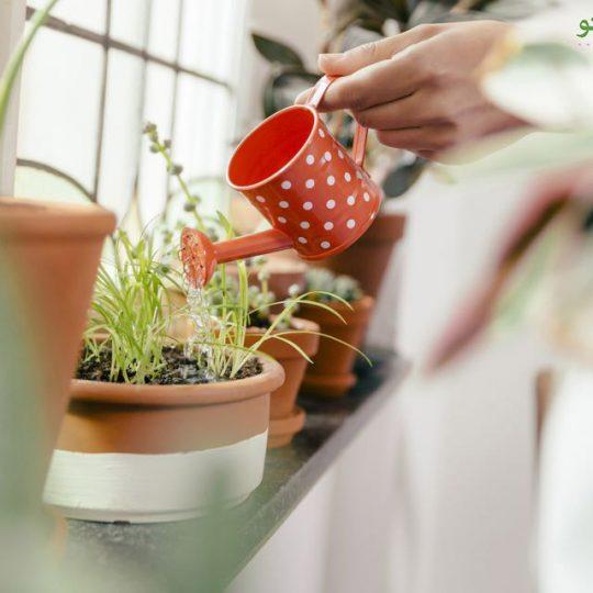 همه چیز درباره کود دادن به گیاهان خانگی