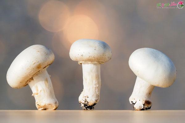 ویتامین های موجود در قارچ