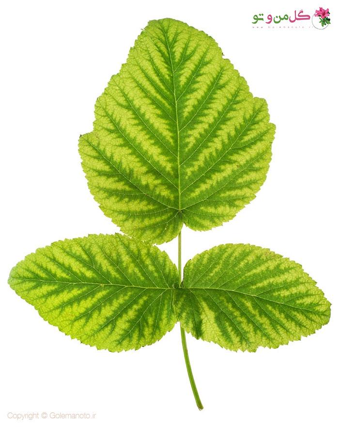 عوامل کمبود آهن در گیاهان