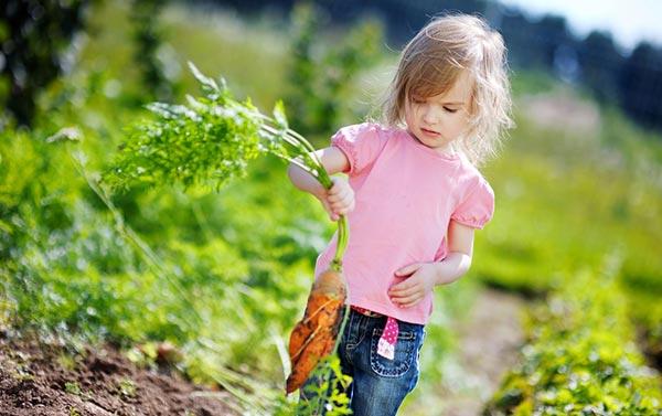 کاشت هویج باغبانان کوچک