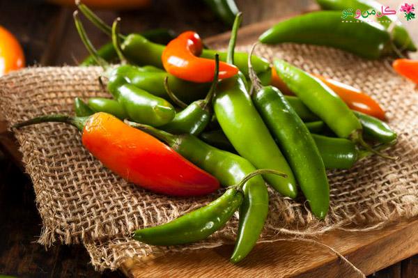 انتخاب فلفل - فلفل سرانو Serrano pepper