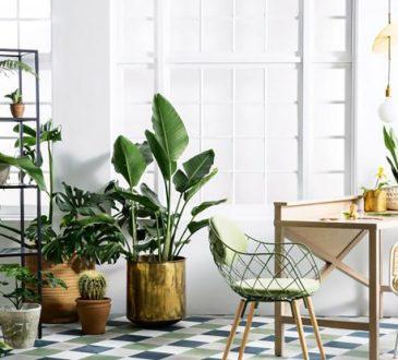 نیازهای اولیه نگهداری گل های آپارتمانی چیه؟