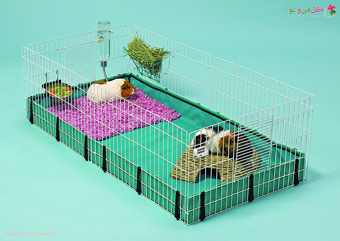 قفس خوکچه هندی