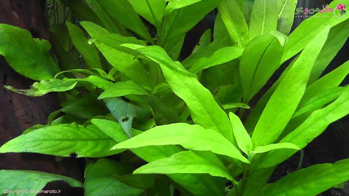 علائم کمبود آهن در گیاهان آپارتمانی