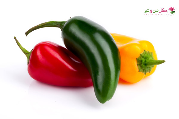 انتخاب فلفل - فلفل هالاپنیو Jalapeno pepper
