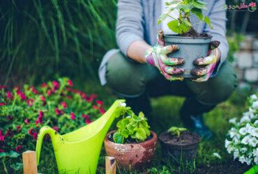 علائم شوکه شدن گیاه و درمان آن