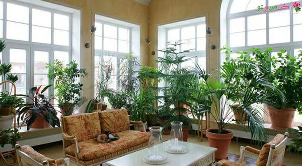 گیاهان باعث افزایش بازدهی در محیط کاری هستند