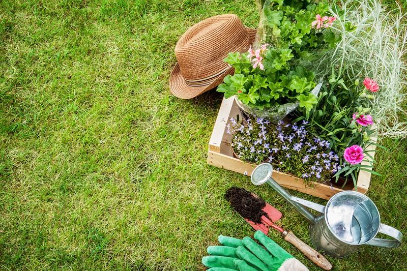 کاشت گیاه در خاک نامرغوب