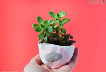 DIY Mini Pinch Pot Planters Click Through For Tutorial 9 آموزش ساخت گلدان با خمیر پلیمیر (مجسمه سازی)