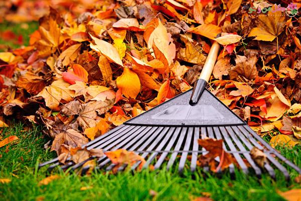 ایجاد مالچ با استفاده از برگ های پاییزی
